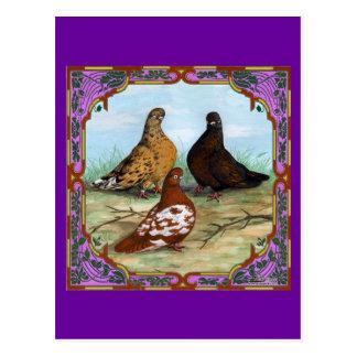 English Shortfaced Pigeons Framed Postcard