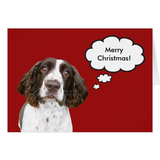 English Springer Spaniel Christmas Card