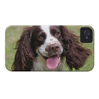 English Springer Spaniel dog beautiful photo, gift iPhone 4 Case-Mate Cases