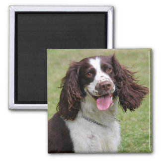 English Springer Spaniel dog beautiful photo, gift Magnet