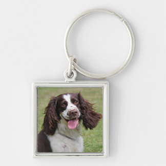 English Springer Spaniel dog beautiful photo, gift Silver-Colored Square Key Ring