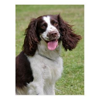 English Springer Spaniel dog beautiful photo Postcard