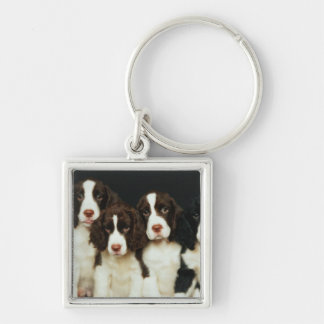 English Springer Spaniel Puppies (2) Silver-Colored Square Key Ring
