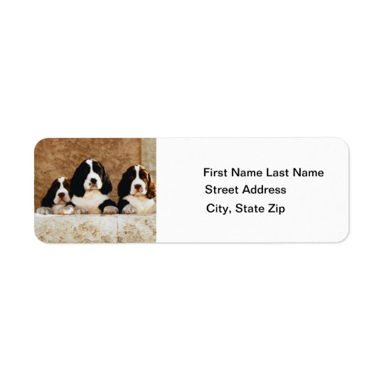English Springer Spaniel Puppies Return Address Label