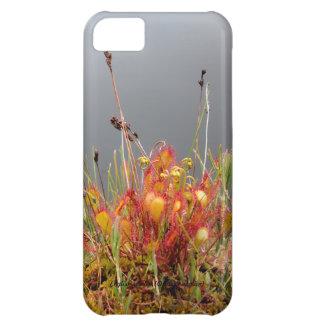 English Sundew iPhone 5C Covers