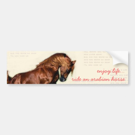 enjoy life...ride an arabian horse bumper stickers