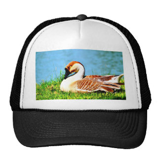 Enjoy peace of mind with you hat