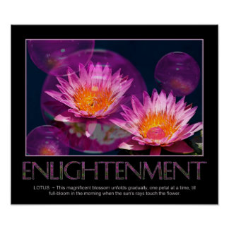 Enlightenment Poster - Waterlily - Lotus