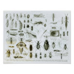 Entomology Insects Posters