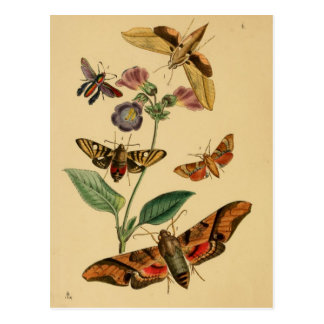 Entomology Postcard