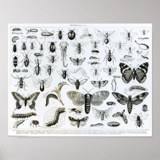 Entomology Poster
