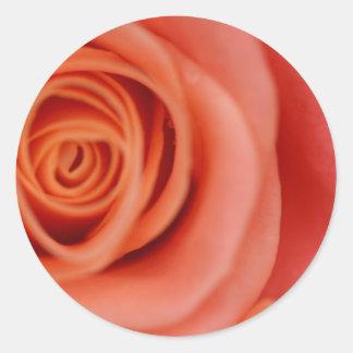 Envelope Seals: Pink Blush Rose Round Sticker