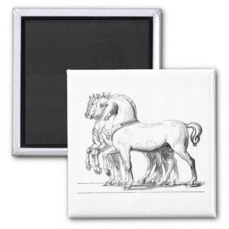 Equestrian Magnet