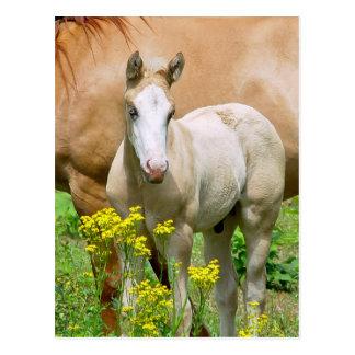 Equine Art Postcard