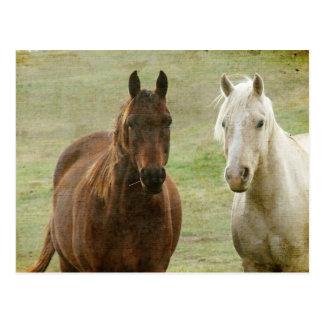 Equine Buddies Postcard