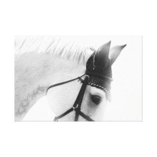 equine fine art canvas - noir