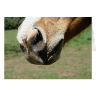 Equine Nose Card
