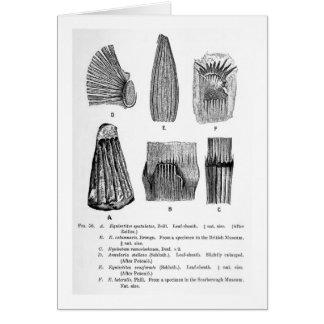 Equisetites spatulatus art postcard