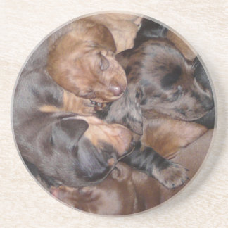 Eridox Dachshunds dapple brindle puppies coaster