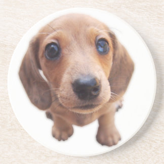 Eridox Dachshunds red dapple puppy Jilorra coaster