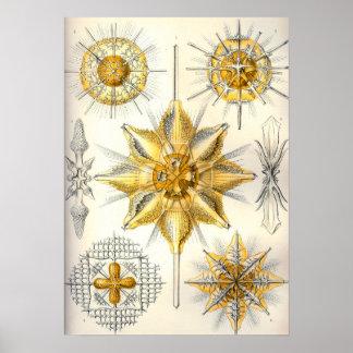 Ernst Haeckel  Acanthometra Poster