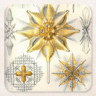 Ernst Haeckel  Acanthometra Square Paper Coaster