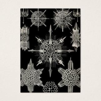 Ernst Haeckel | Acanthophracta Business Card
