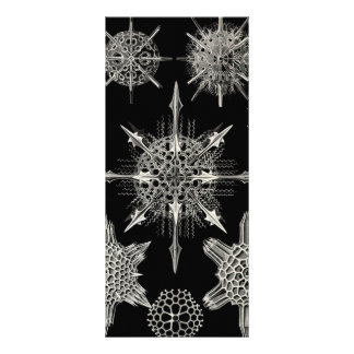 Ernst Haeckel   Acanthophracta Personalized Rack Card