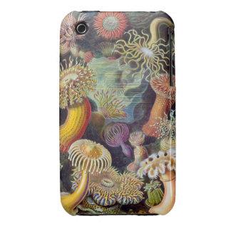 Ernst Haeckel - Actiniae iPhone 3 Case