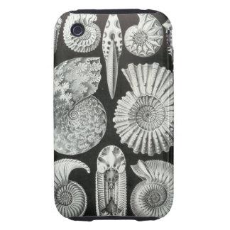 Ernst Haeckel - Ammonitida iPhone 3 Tough Cases