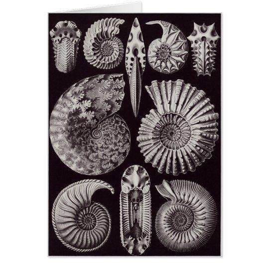 Ernst Haeckel Art Card: Ammonitida Card
