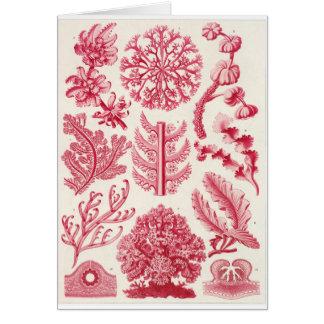 Ernst Haeckel Art Card: Florideae Card