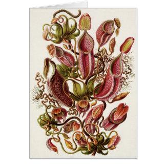 Ernst Haeckel Art Card: Nepenthaceae Card