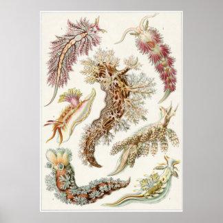 Ernst Haeckel Art Print: Nudibranchia Poster