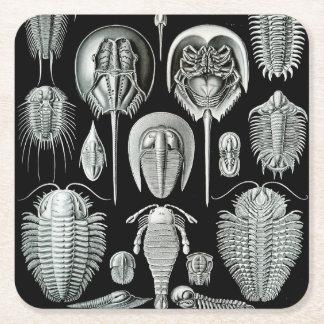 Ernst Haeckel Aspidonia crabs Square Paper Coaster