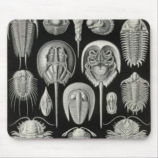 Ernst Haeckel - Aspidonia Detail Mouse Pad