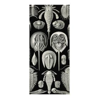 Ernst Haeckel Aspidonia Rack Cards
