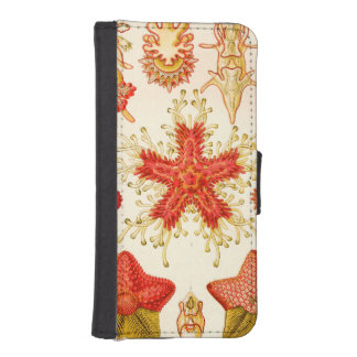 Ernst Haeckel Asteridea iPhone SE/5/5s Wallet Case