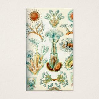 Ernst Haeckel Bryozoa invertebrates Business Card