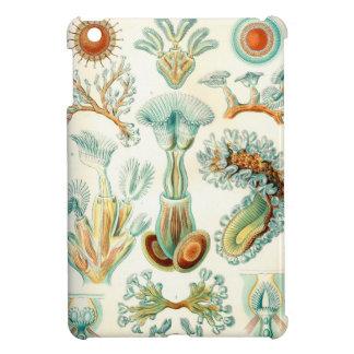 Ernst Haeckel Bryozoa invertebrates iPad Mini Cover
