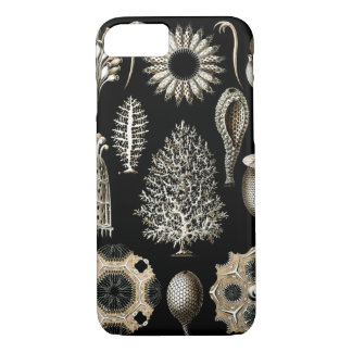 Ernst Haeckel Calcispongiae iPhone 8/7 Case