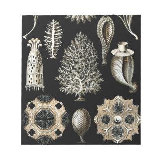 Ernst Haeckel Calcispongiae Notepad
