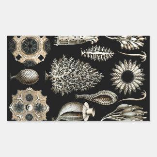 Ernst Haeckel Calcispongiae Rectangular Sticker