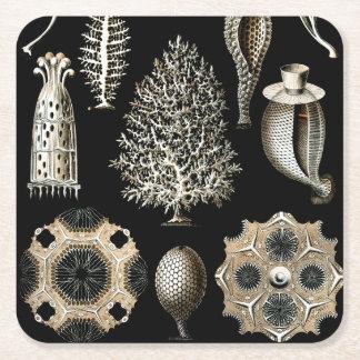Ernst Haeckel Calcispongiae Square Paper Coaster