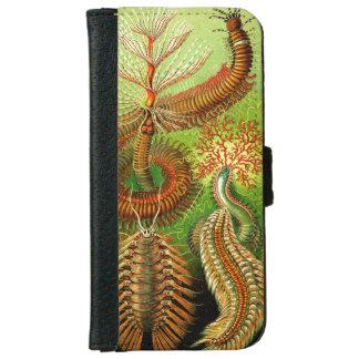 Ernst Haeckel Chaetopoda iPhone 6 Wallet Case