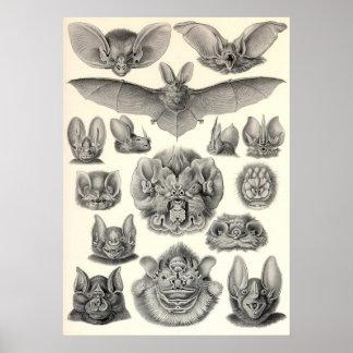 Ernst Haeckel - Chiroptera Bats Posters