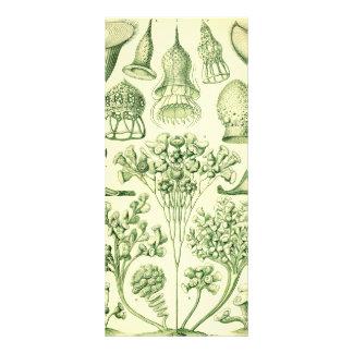 Ernst Haeckel Ciliata 10 Cm X 23 Cm Rack Card