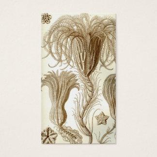 Ernst Haeckel Crinoidea feather stars Business Card