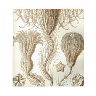 Ernst Haeckel Crinoidea feather stars Notepad