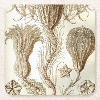 Ernst Haeckel Crinoidea feather stars Square Paper Coaster